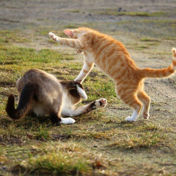 Schlagfertigkeit Katze Rhetorik Präsentation Überzeugen Einwand Kampf